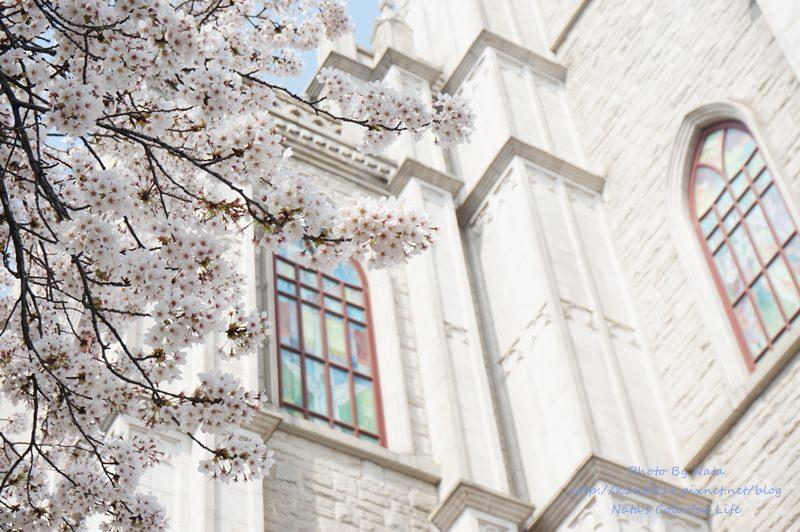 【旅遊✈韓國】首爾自由行│櫻花最前線‧慶熙大學경희대학교。Hen壯觀的歐式建築!櫻花怎麼拍都漂亮